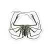 Whip Spider Sticker