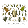 I Love the Beetles