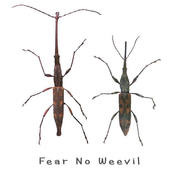 Fear No Weevil Shirt